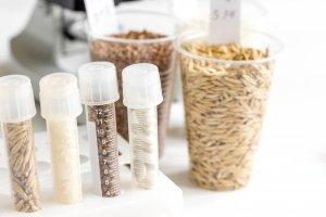 Arsen im Reis. Was Sie wissen müssen! 8